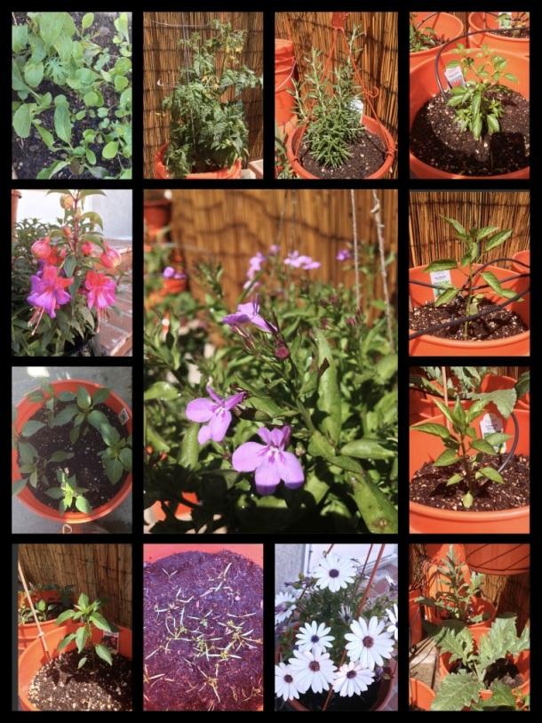 April 2013 Garden Update